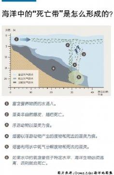 海洋生物数量缘何逐年减少?
