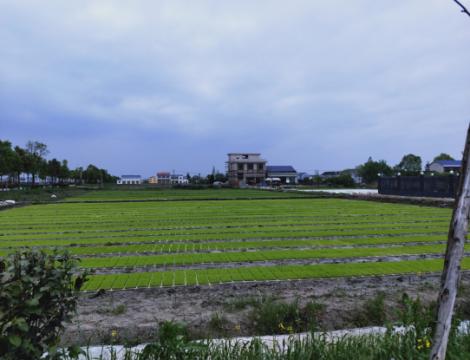 湖南宁乡水稻全程全自动智能化育秧苗工厂建成投产