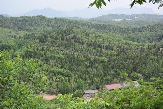 国家林草局:20年来我国退耕还林还草5.15亿亩